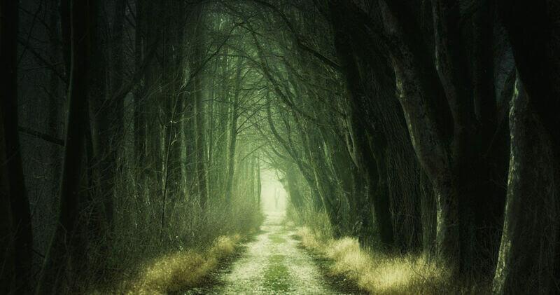 Weg im Wald, Foto: jplenio, Pixabay